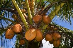 coco orange