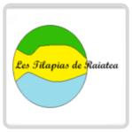 Les Tilapias de Raiatea