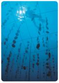 L'exploitation des ressources naturelles marines*