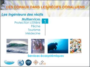 Les coraux dans les récifs coralliens