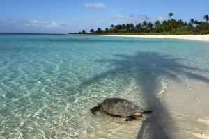 DOUNIAMAG-POLYNESIA-ENVIRONMENT-TOURISM-BRANDO